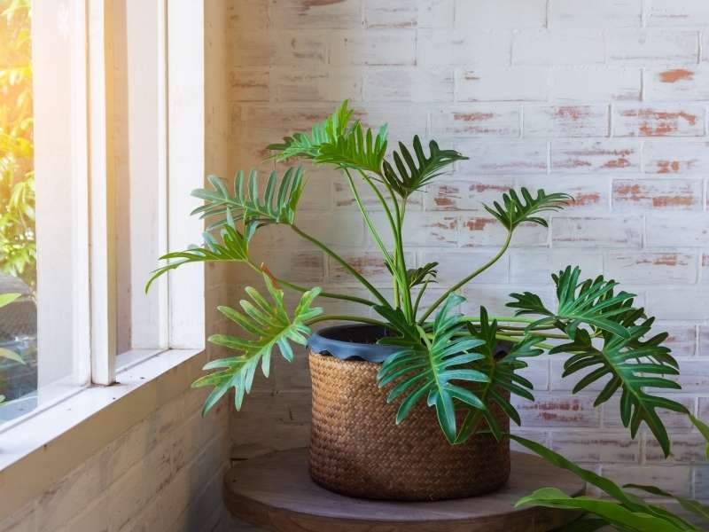Give Life To Your Design With Plants