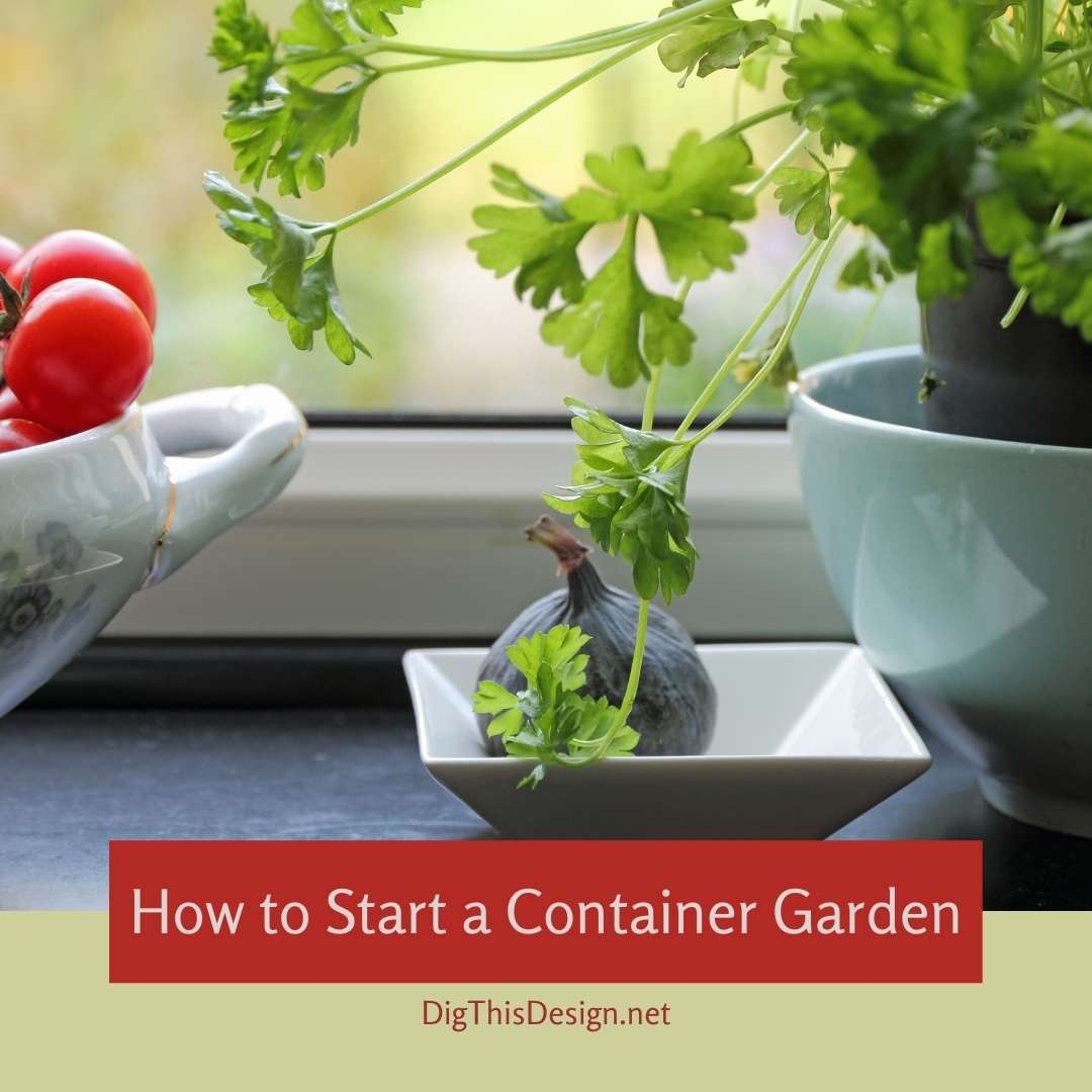 How to Start a Container Garden