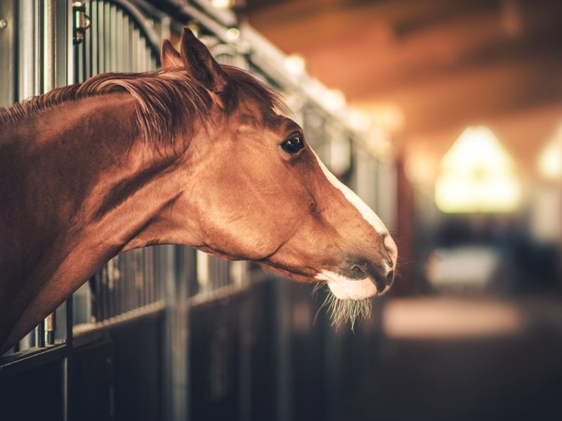 High End Horse Barns
