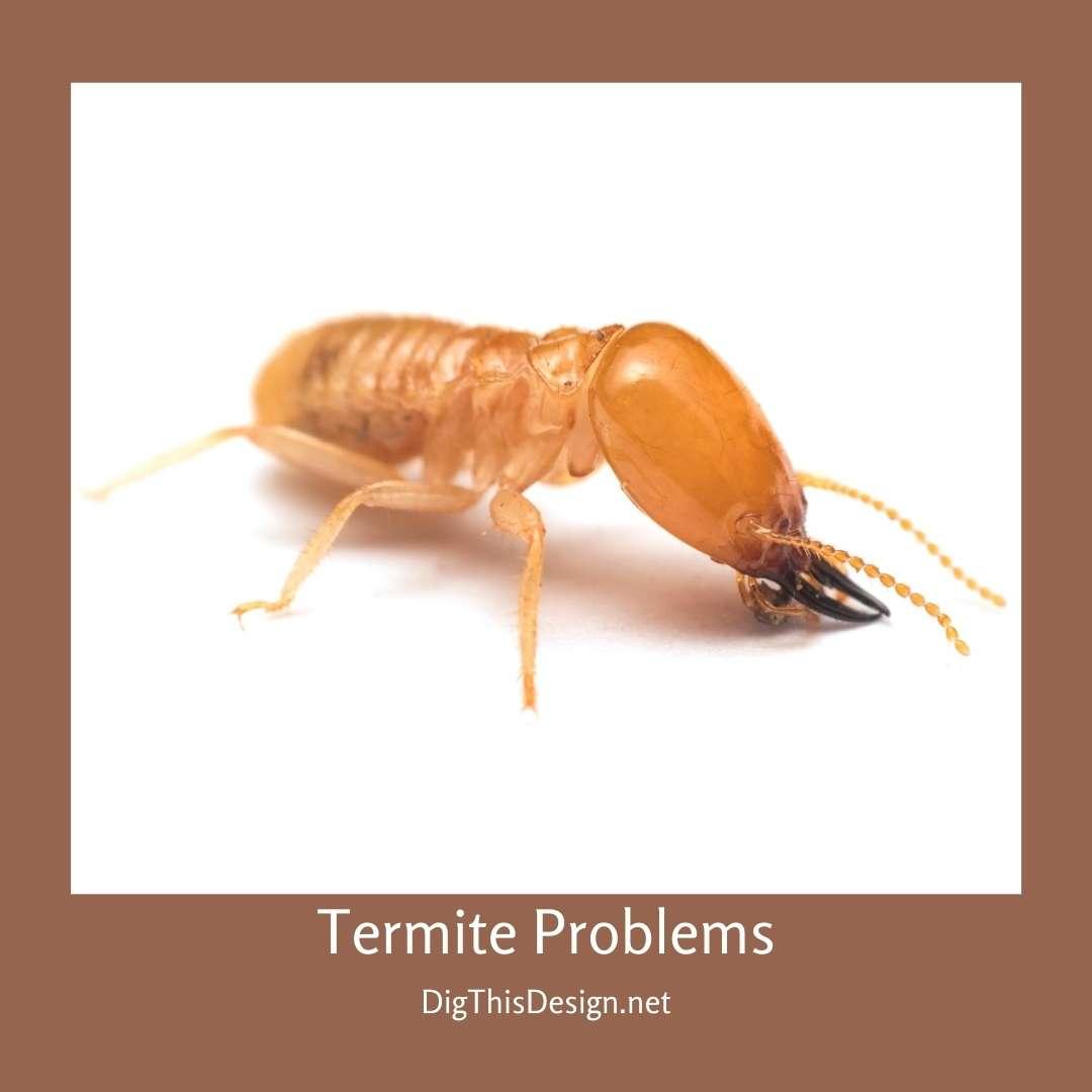 Termite Problems