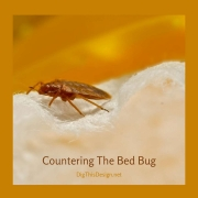 Countering-The-Bed-Bug