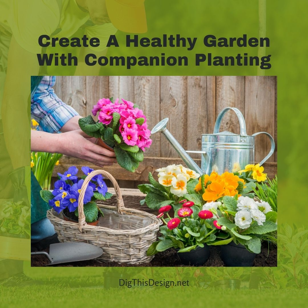 Create A Healthy Garden With Companion Planting