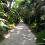 Path that runs throughout McKee Botanical Garden.
