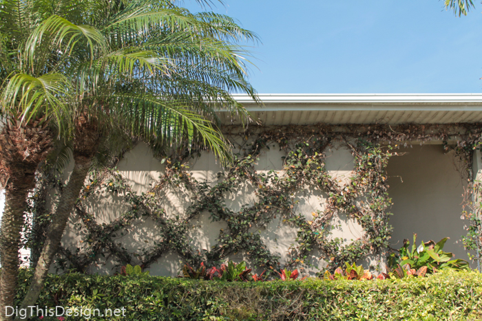 Garden trellis with jasmine vine for front porch design project.