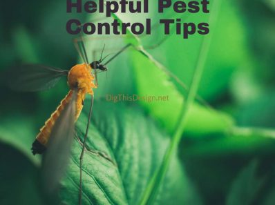 Helpful Pest Control Tips