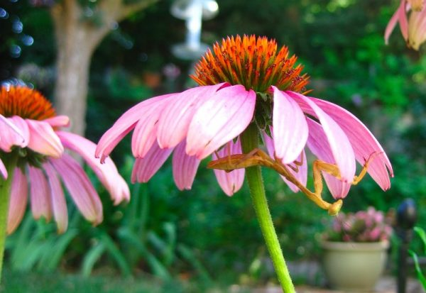 Garden Growing - Match your plant to the climate for successful outcomes.