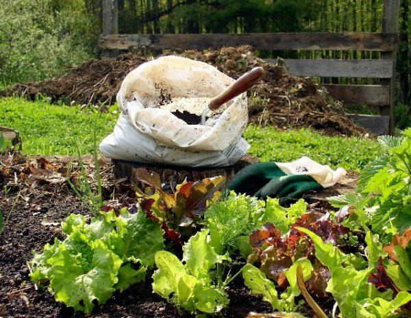 Garden Growing - Compost adds nutrients to your garden.