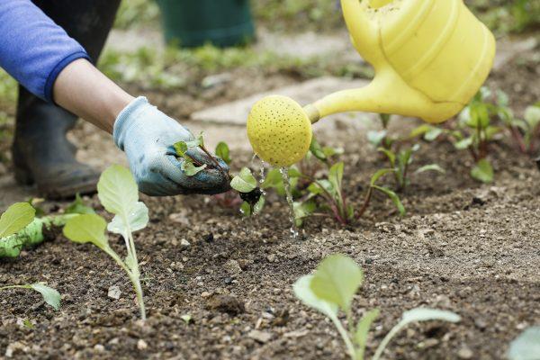 Garden Growing - Maintaining your garden.