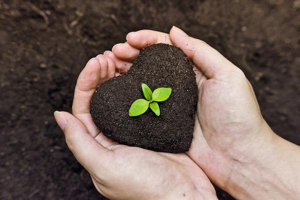 Garden Growing - Good Soil creates good gardens.