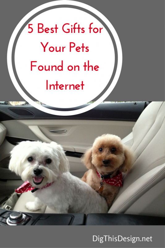 Shop pet gifts for your pet on the internet.