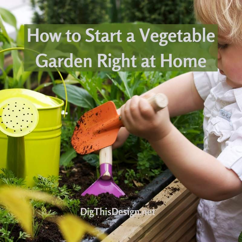 How to Start a Vegetable Garden Right at Home