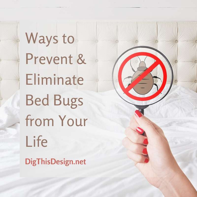 Ways to Prevent & Eliminate Bed Bugs from Your Life