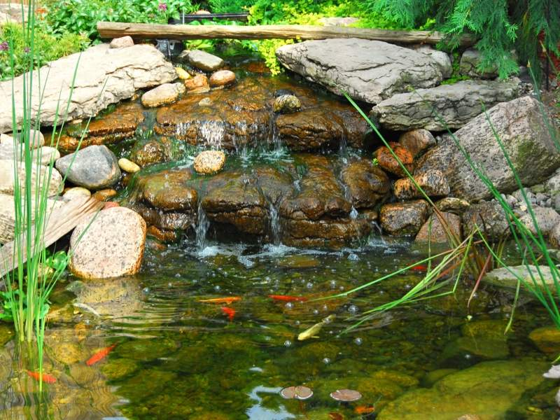 5 Reasons a Fish Pond is a Great Addition to Your Yard