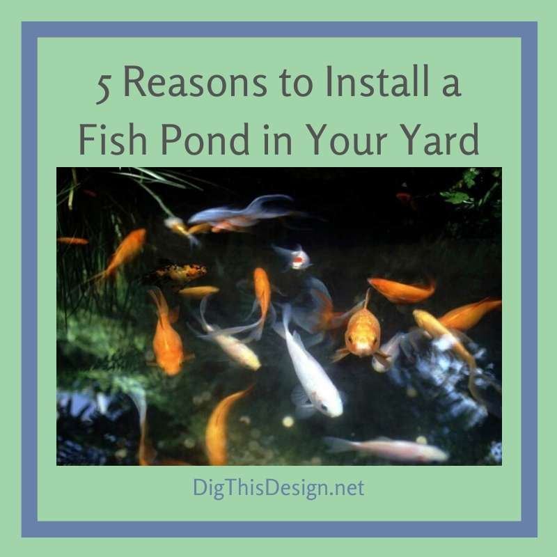 5 Reasons to Install a Fish Pond in Your Yard
