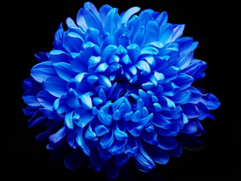 We're Seeing (Indigo) Blue