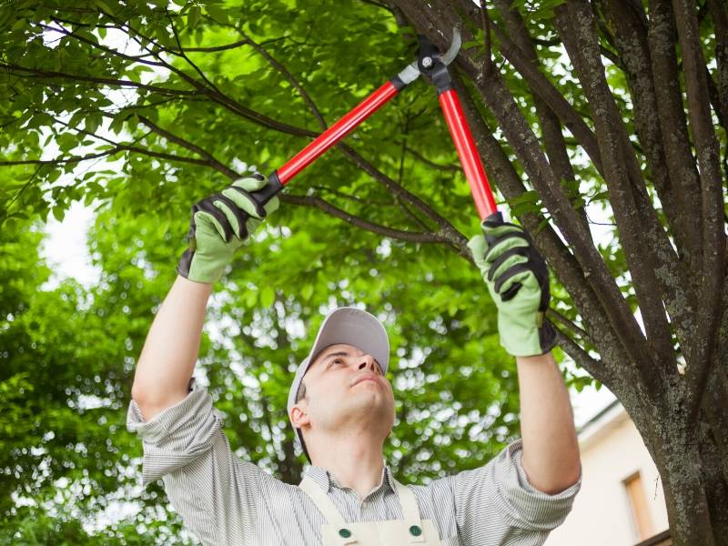 Try These Lawn Care Tips to Storm-Proof Your Landscaping