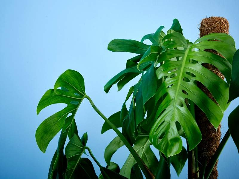 Greenery to make your house a home