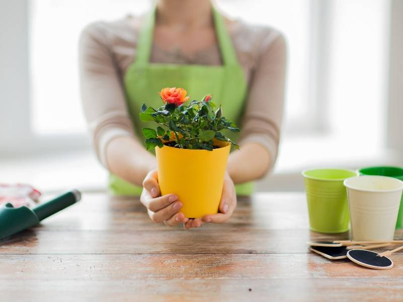 Get Creative With Garden Pots