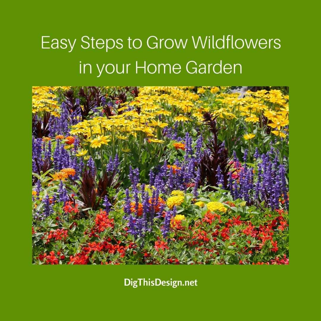 Grow Wildflowers in your Home Garden