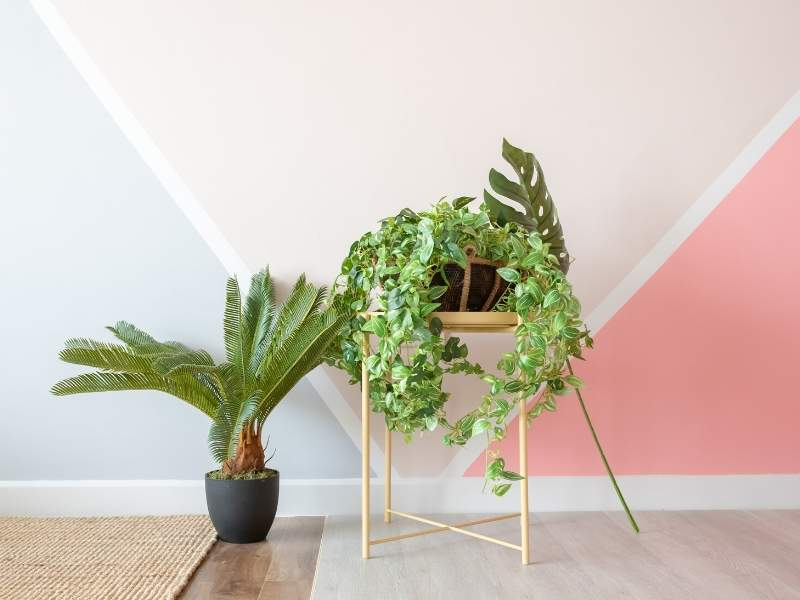 Modern home house plants