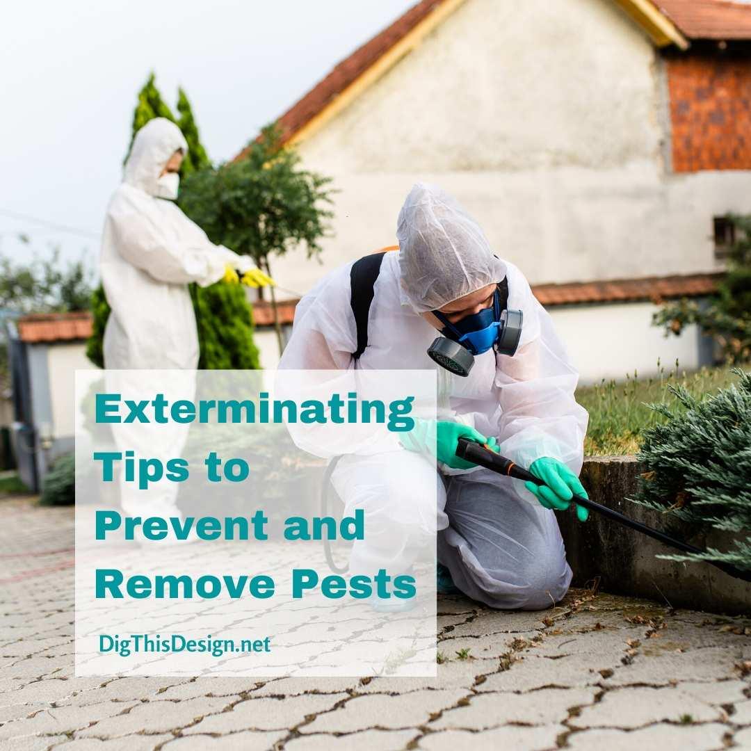 Preventing a pest problem