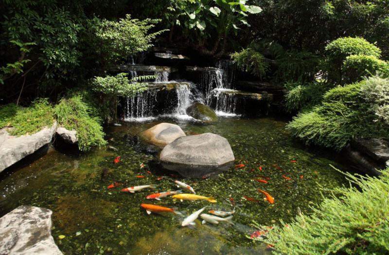 Designing water coi pond