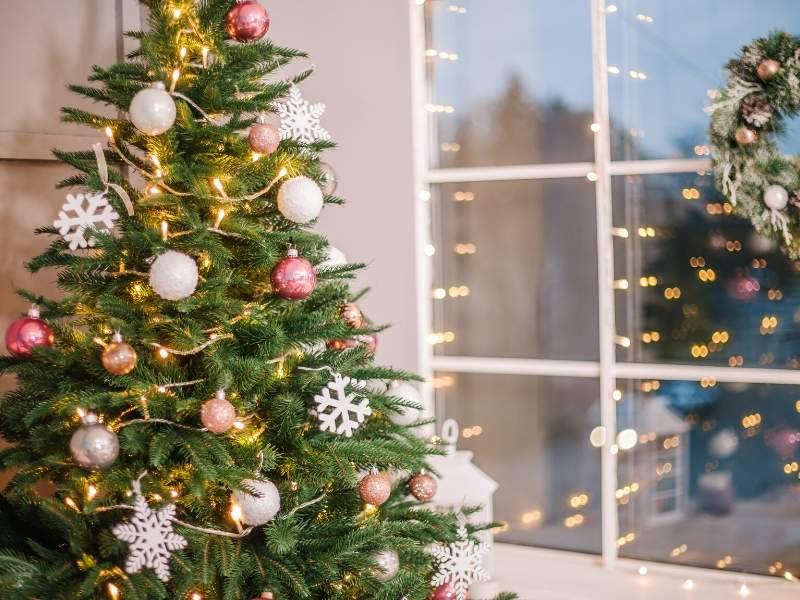 Christmas tree holiday plants