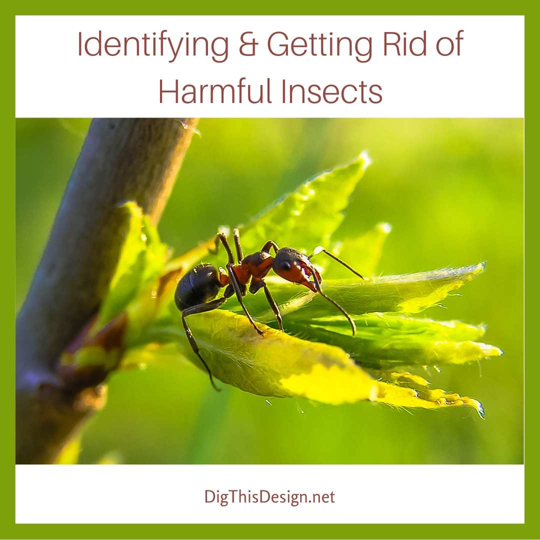 Identifying & Getting Rid of Harmful Insects
