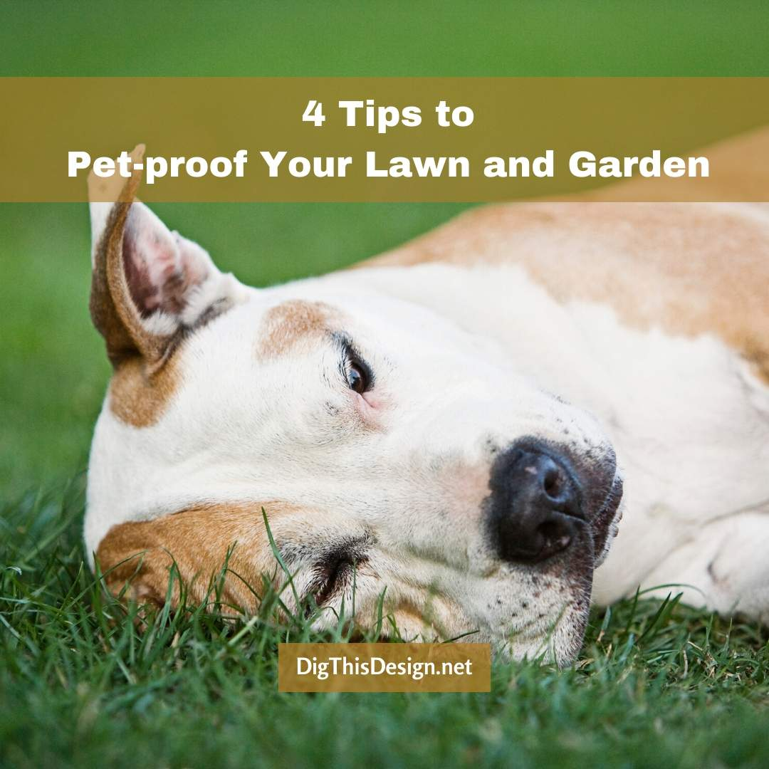 4 Tips to Pet-proof Your Lawn and Garden