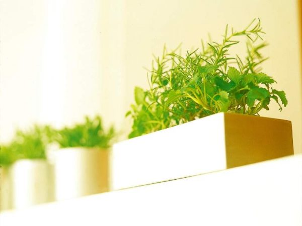 Herbs and Spices in a plant box add green plants to the kitchen