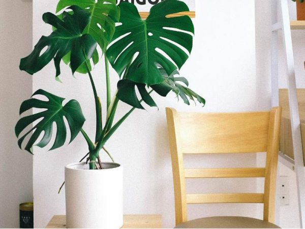 Big Green Plants in a Small Space