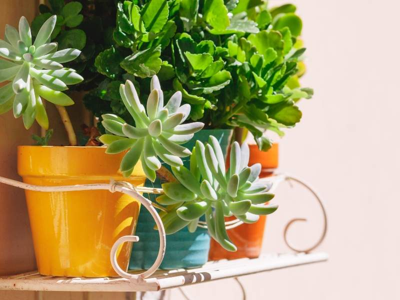 Succulents for easy care and variety of green plants in your home or office