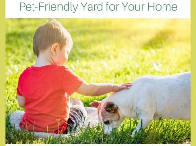 4 Steps to a Pet-Friendly Yard for Your Home