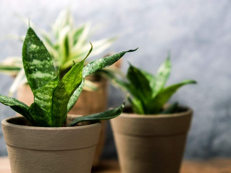 Bring nature inside with house plants