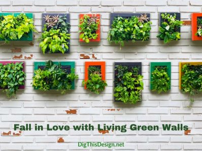 Fall in Love with Living Green Walls