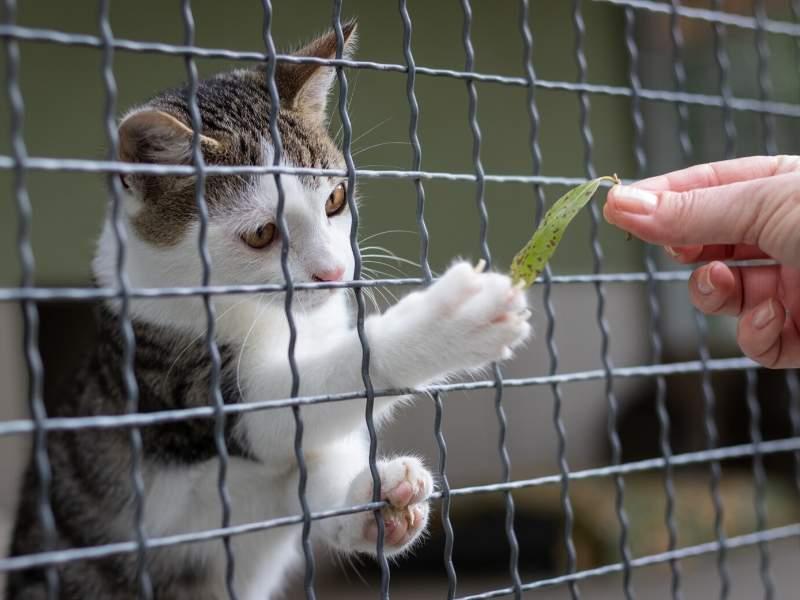 Add a pet-friendly fence