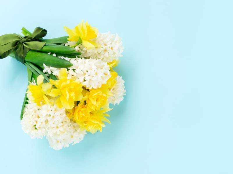 Hyacinth and Daffodil for Spring Bouquets