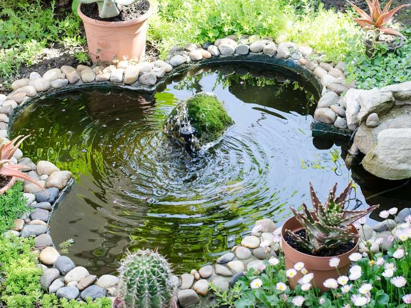 Landscape your garden with a focal point