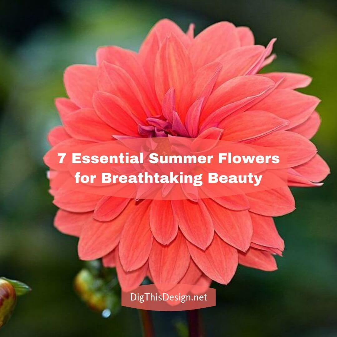 7 Essential Summer Flowers for Breathtaking Beauty