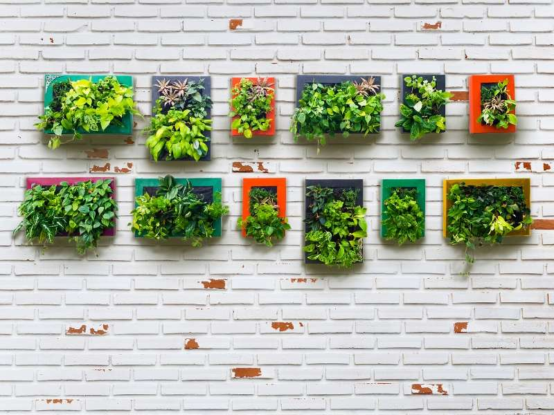 Vertical Garden for the home