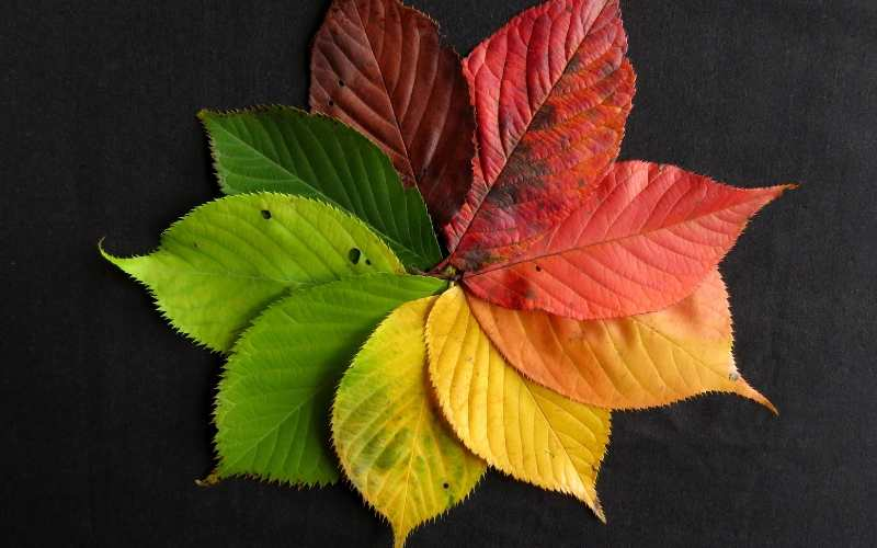 Leaves Earth Colors for Your Home Design