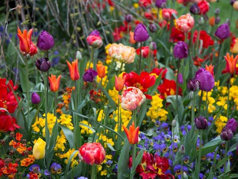 Multi Colorful Summer Garden Ideas