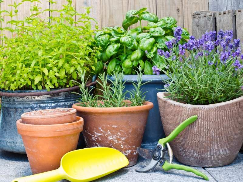 Herbs and Colorful Summer Garden Ideas