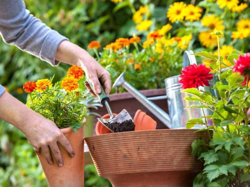 Plant Your Garden Flowers