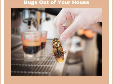 6 Recommendations to Keep Bugs Out of Your House