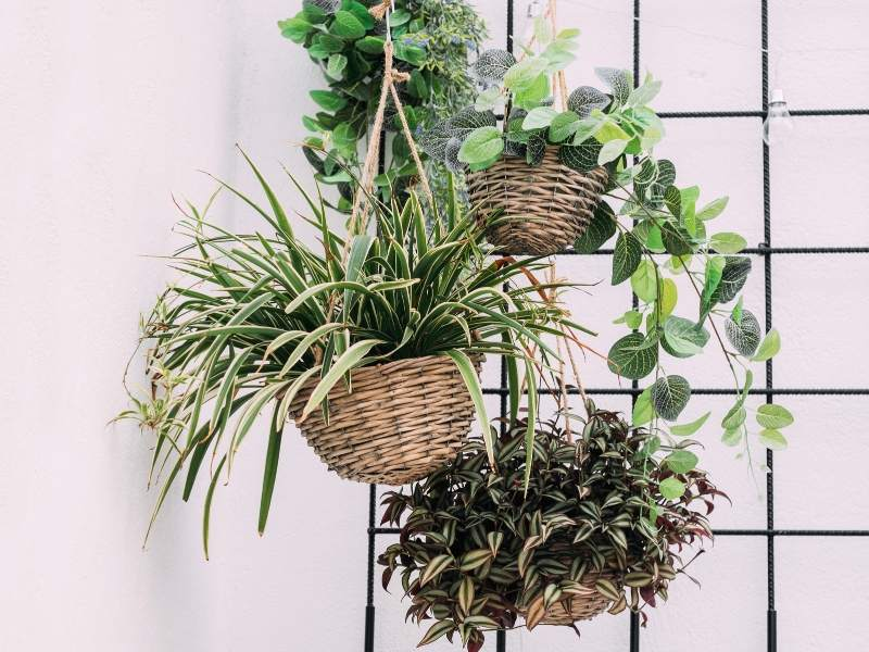 Elevate Your Home Decor with House Plants