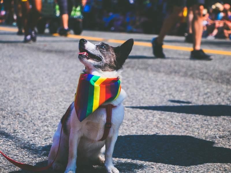 LGBTQ+ Pride in Orlando