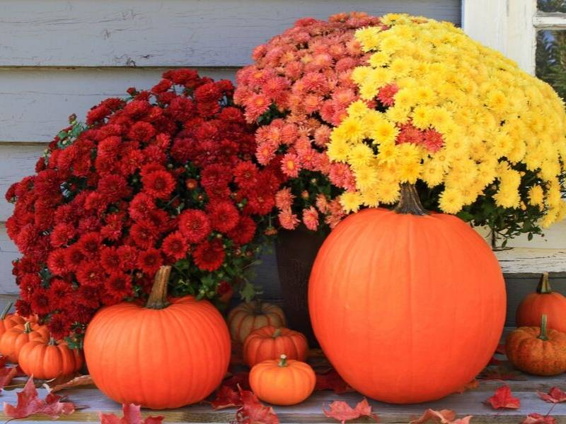 Entertain with Pumpkins Jumbo Arrangement Front Porch