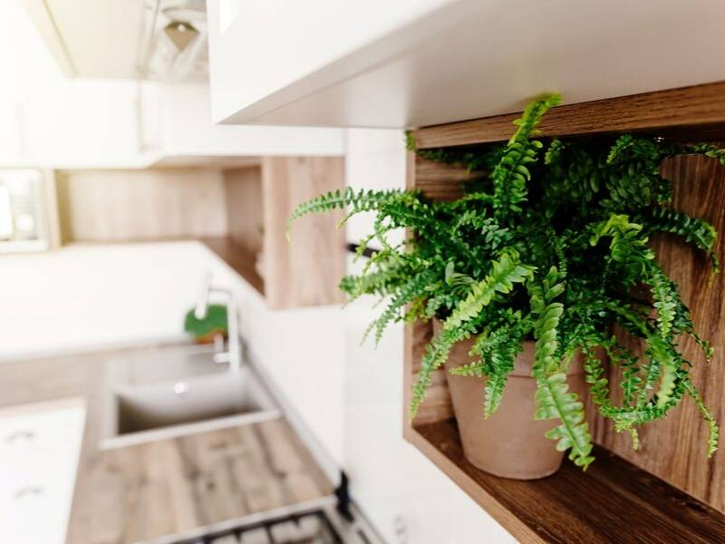 Renovate Your Kitchen with Green Plants