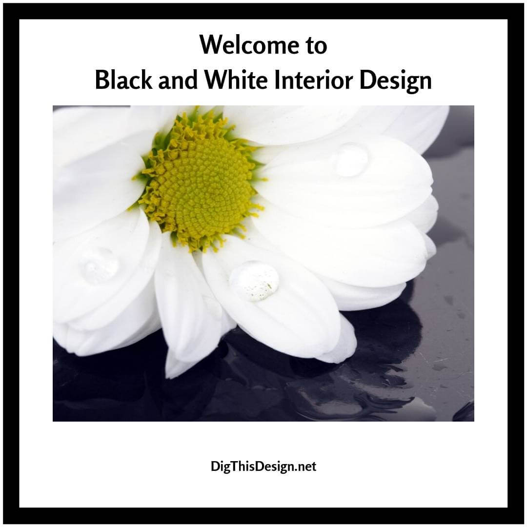 Welcome to Black and White Interior Design